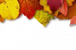 leaves-183414_640